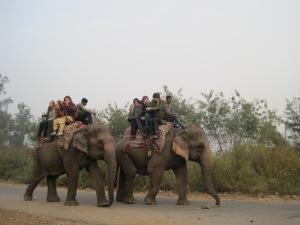 Elefantenritt in Delhi an meinem Geburtstag.
