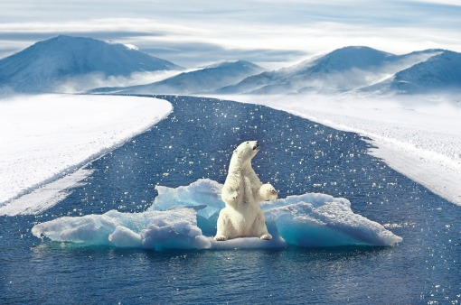 polar-bear-2750604_1920.jpg